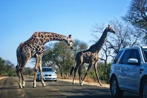 Safári na África do Sul, o Parque Nacional do Kruger é a forma mais barata de se fazer um Safári no Mundo!