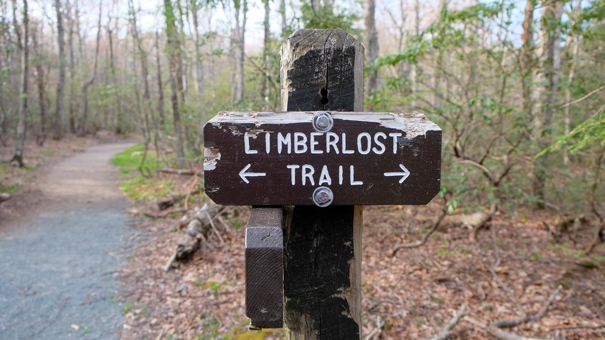 Walking Limberlost Trail