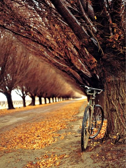 Central Park Fall Wallpaper Habitually Chic 174 187 November