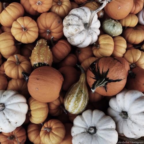 Fall White Pumpkins Wallpaper Habitually Chic 174 187 Autumn Inspiration 2015