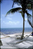 place palmiers