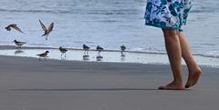 Pieds sur le sable