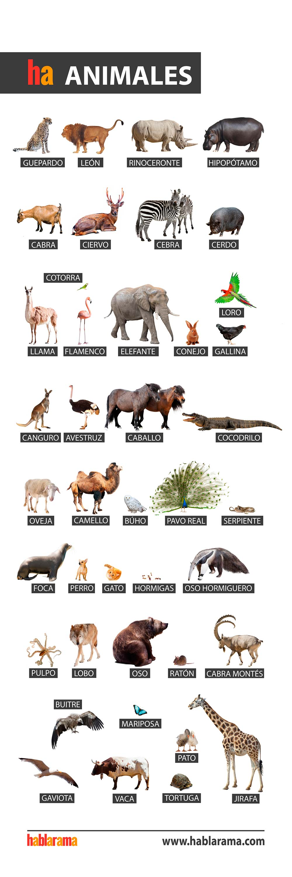animals words in spanish
