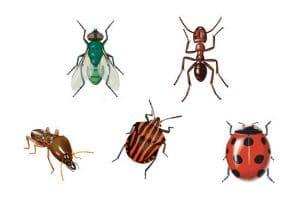 tipos de insectos que existen