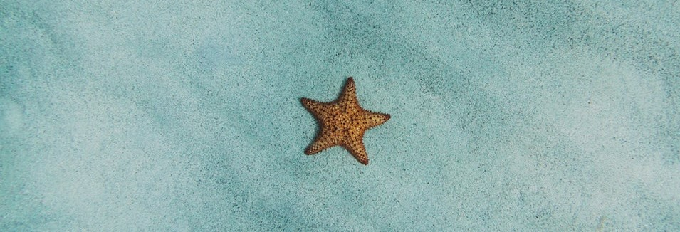 Starfish Breathing with Diane