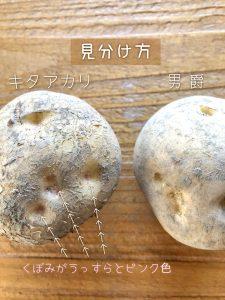 キタアカリ 発酵 土方夕暉 札幌