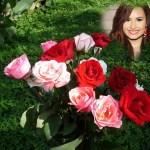 Fotomontaje de rosas para el Dia de la Madre