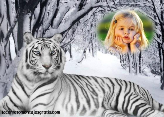 Fotomontaje de animales