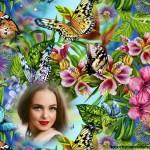 Hermoso fotomontaje de mariposas