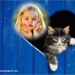Fotomontaje de gatito tierno en ventana