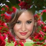 Fotomontaje de rosas rojas