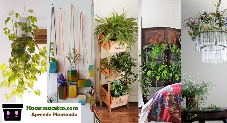 Plantas de interior y las macetas mas ideal y lindas para for Casas decoradas con plantas de interior