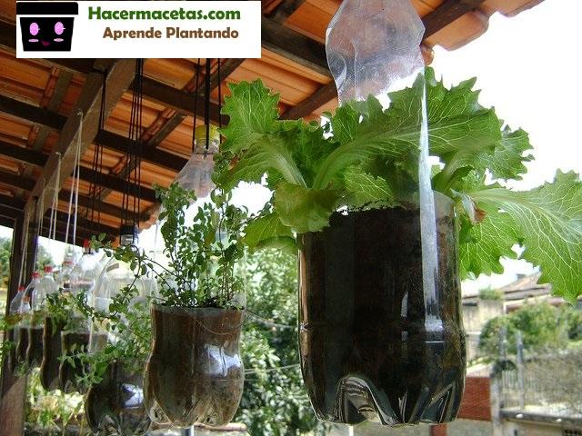 mini huertos con botellas de plastico