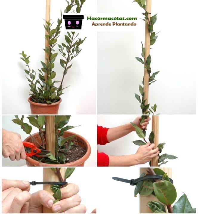 otras formas de moldear los troncos