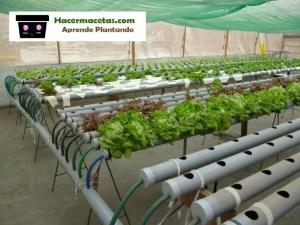 sistema de riego de los cultivos hidroponicos