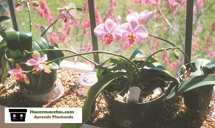 orquideas en macetas de plastico
