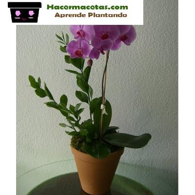orquideas en macetas de barro