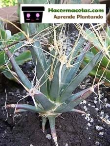 los cactus mas bellos
