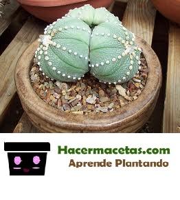 Astrofito en reproduccion
