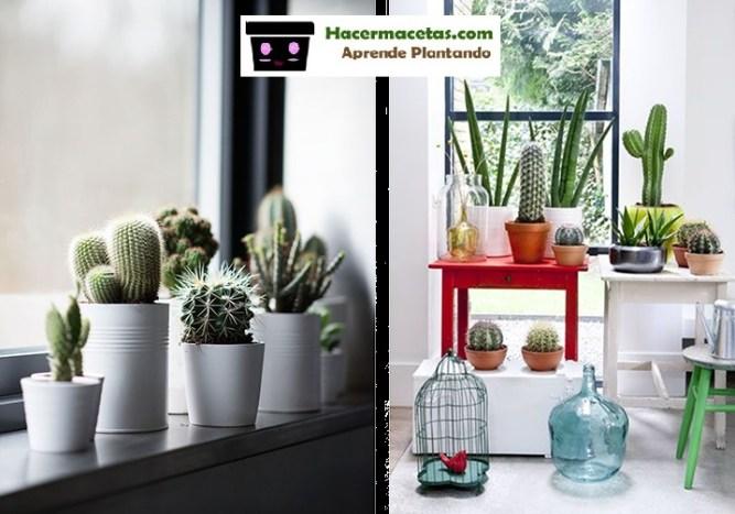 cactus para tus ventanas una eco decoracion
