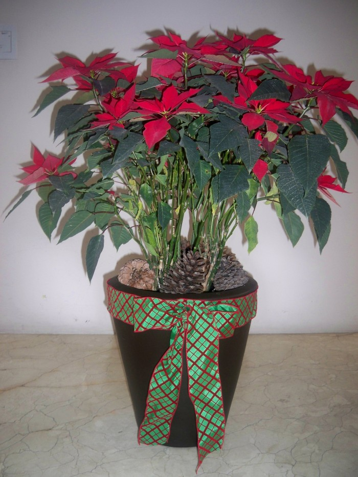 ♲decoración navideña:100 ideas navideñas para decorar tus macetas