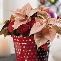 Decoración navideña:100 Ideas  navideñas para decorar tus  macetas.