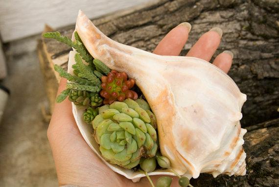 macetas decoradas con conchas del mar una ideas original y economica.