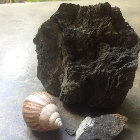 piedras y caracola