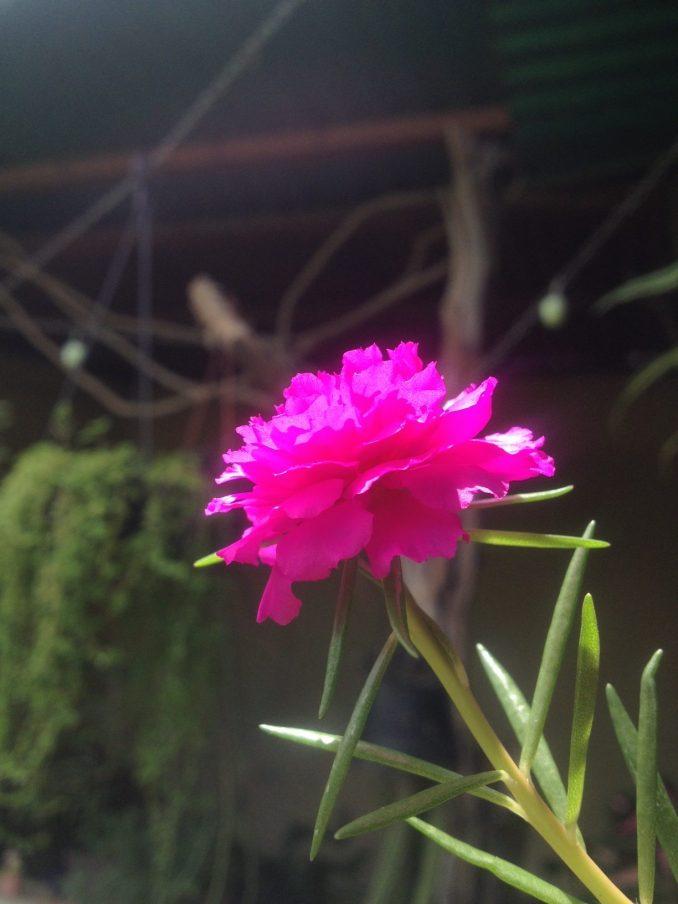 flor de seda hacermaceta original