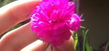 foto original hacermaeta flor de seda bella las 11