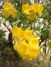 plantas ornamentales de flores amarillas