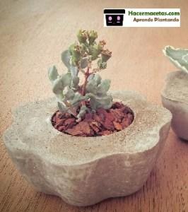 Como Hacer Macetas de Cemento originales y lindas