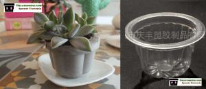 Como Hacer Macetas de Cemento con envases de gelatina