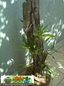 Macetas Orgánicas de Madera para orquídeas muy bonitas