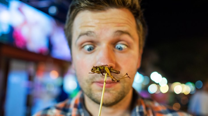 Guy looking at cricket on a stick