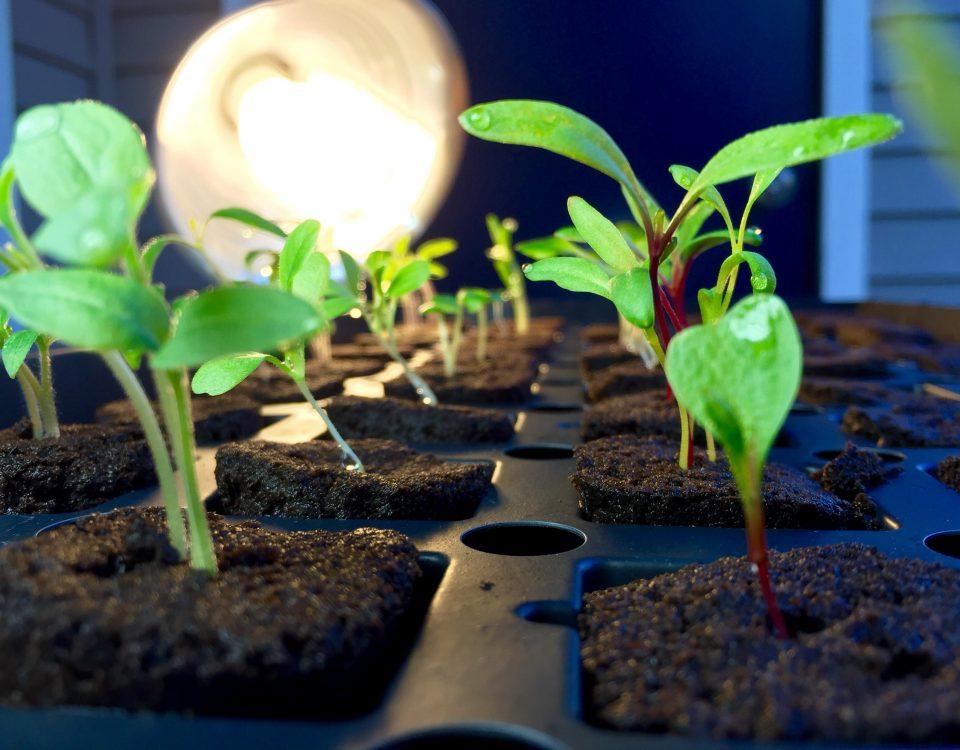 Giá thể trồng rau thủy canh