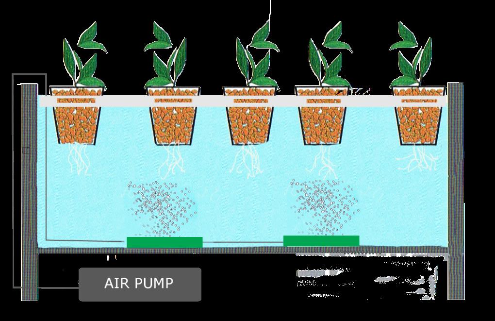 Phương pháp khắc phục tình trạng thối rễ khi trồng rau bằng phương pháp thủy canh tĩnh