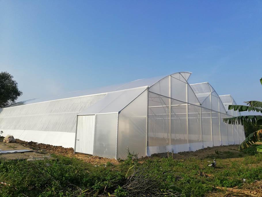 nhà màng trồng rau