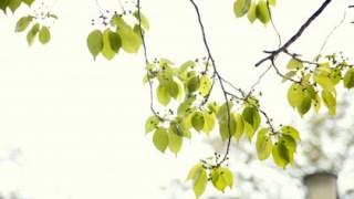 初夏を感じる新緑の葉っぱ