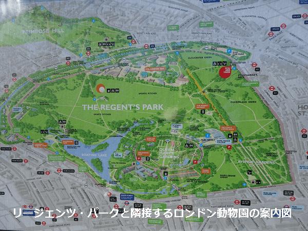 リージェンツ・パークとロンドン動物園案内図
