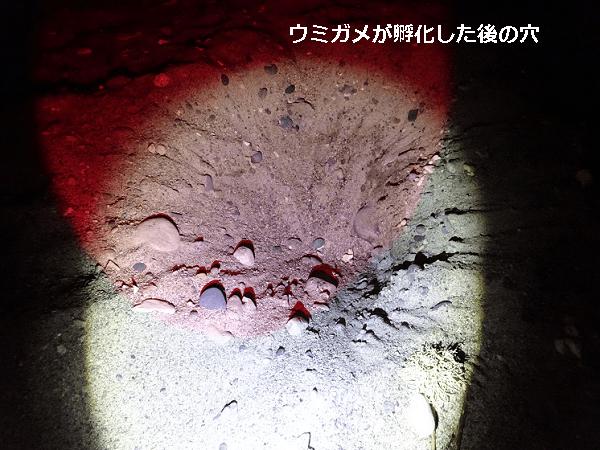 海亀が孵化した後の穴