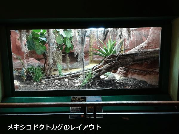 メキシコドクトカゲのレイアウト