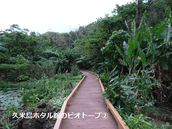 久米島ホタル館のビオトープ②