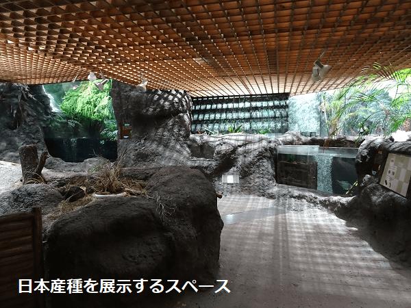 日本産種を展示するスペース