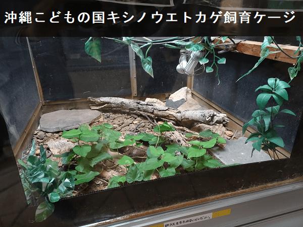 沖縄こどもの国キシノウエトカゲ飼育ケージ