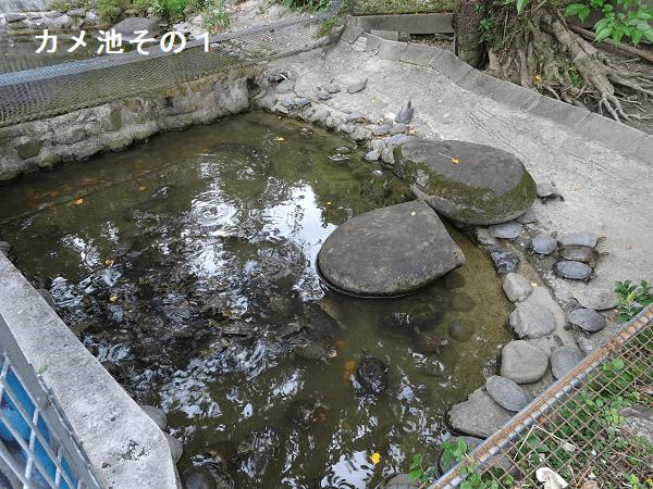 カメ池その1