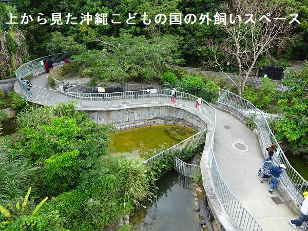 上から見た沖縄こどもの国の外飼いスペース