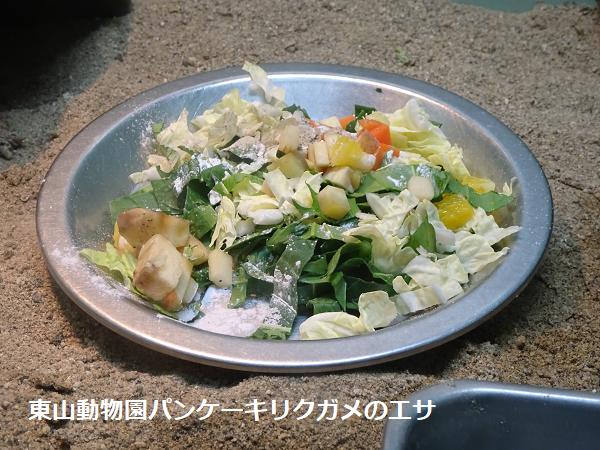 東山動物園パンケーキリクガメのエサ
