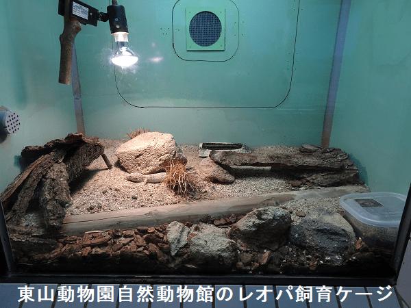 東山動物園自然動物館のレオパ飼育ケージ