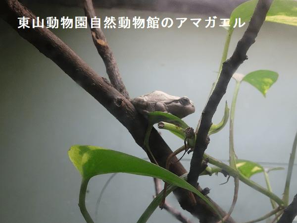 東山動物園自然動物館のアマガエルケージ